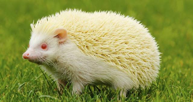 Albinismo y pigmentacion
