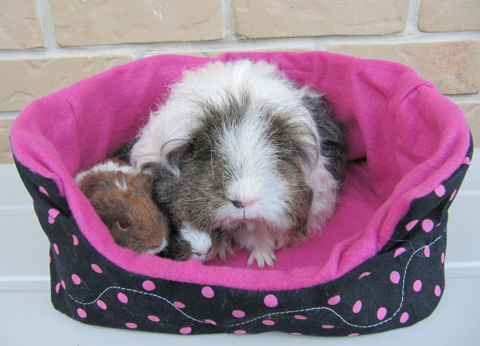 Paw Print Fleece Bed Guinea Pig Snuggle Sack