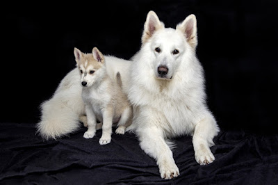 Asian dog breeds, Asian puppy