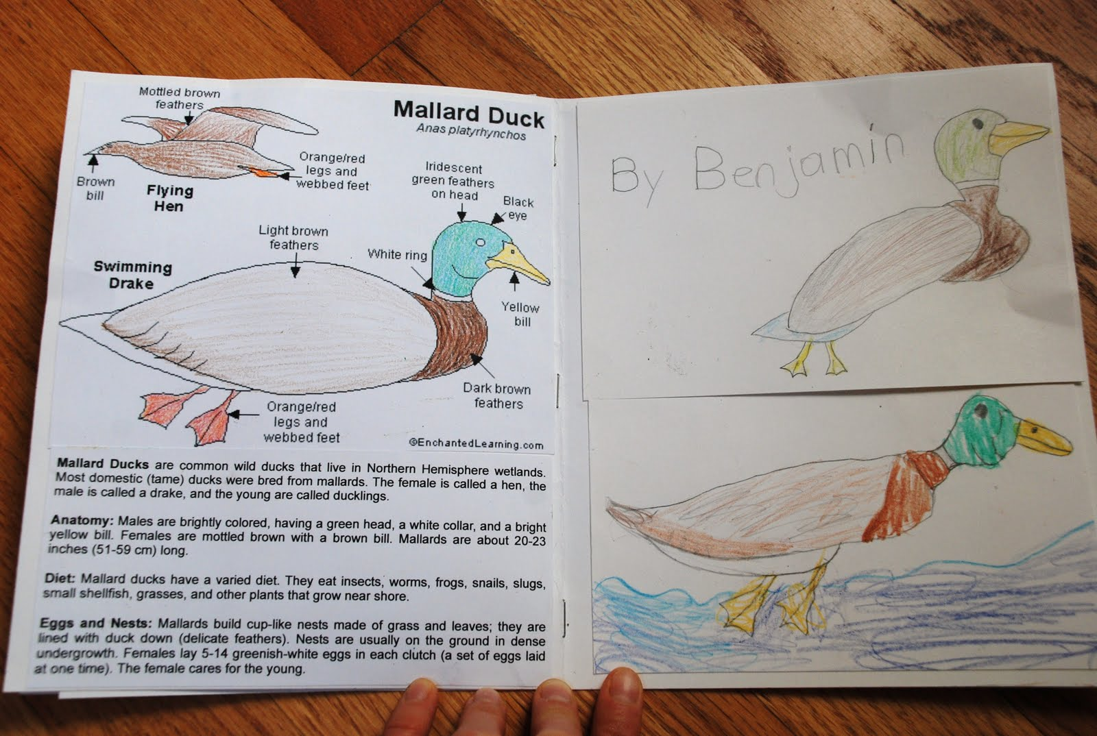 Make Way For Ducklings Worksheets