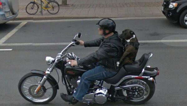 18 Hilariously Weird Moments Captured On Google Street View - Dogs are a man's best friend