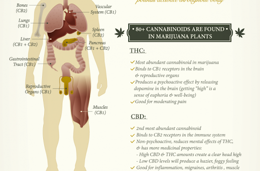 What Cannabis Does To Your Mind & Body Depending On How You Ingest It (Infographic)