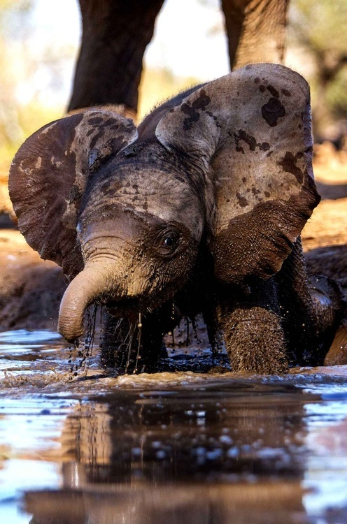 Mud Bath A1 Pictures