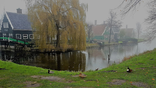 Zaanse Schans lanscape: the lake and some ducks