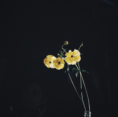 https://www.flickr.com/photos/hako-otoko/24780911099/