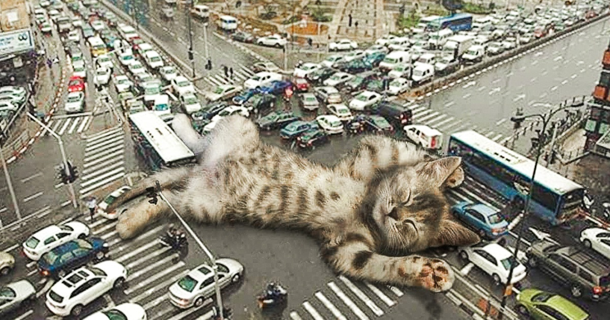 Artist Transforms Cats Into Cute Giants That Conquer The World