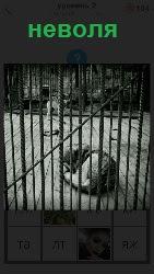 собака в неволе на цепочке сидит в клетке