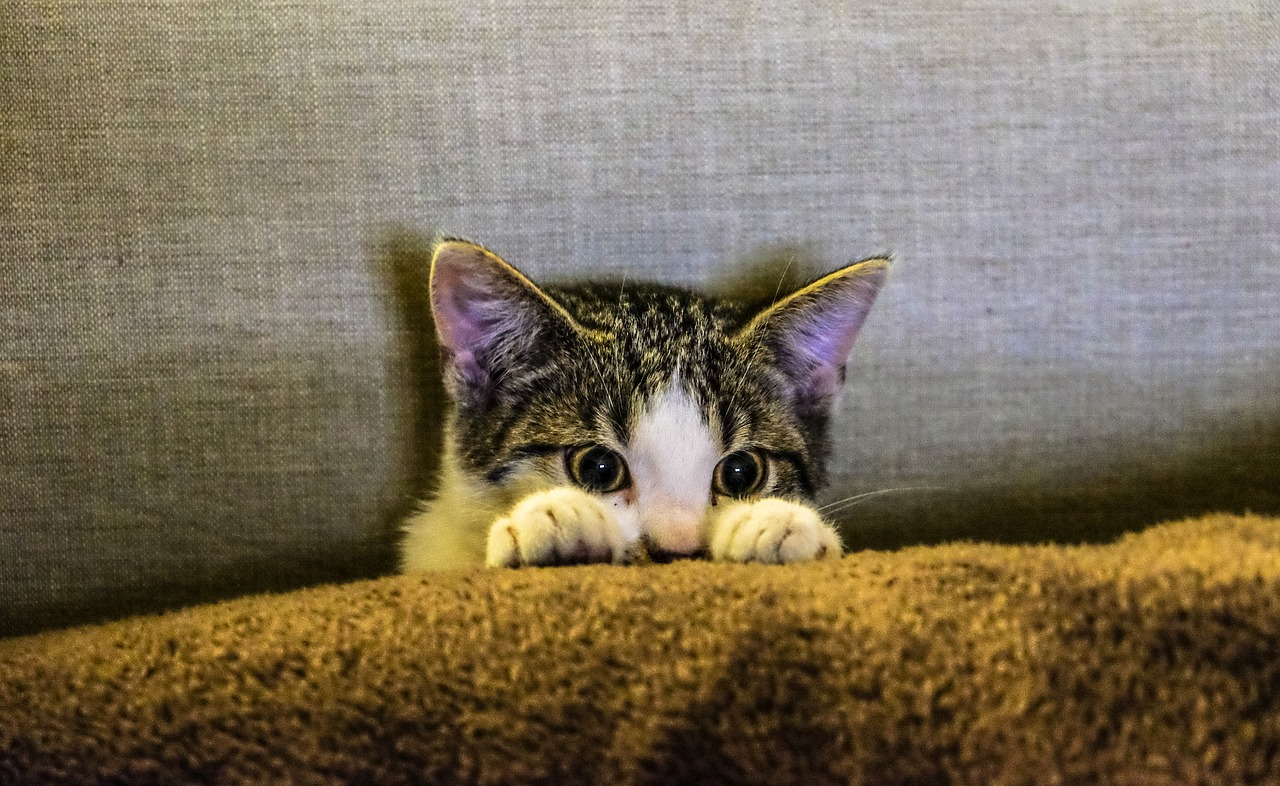 gambar kucing menyorok