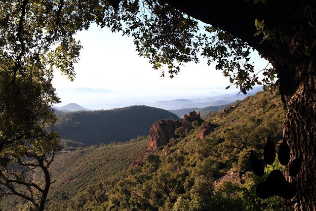 panorama-foret-domaniale-esterel
