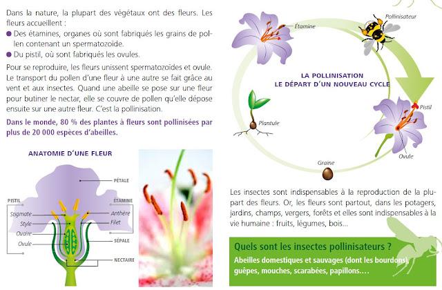 Breuillet nature comment attirer les abeilles dans son jardin - Comment attirer les oiseaux dans son jardin ...