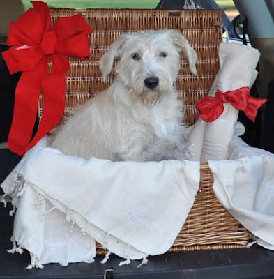 Cotton Dog Blankets Uk