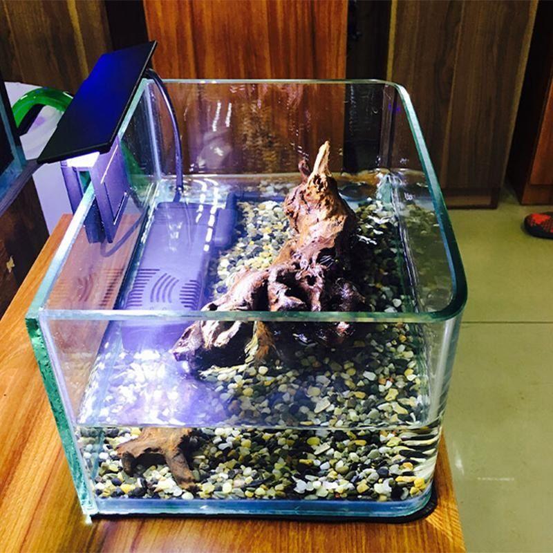 Photo New Ideas Into Do Betta Fish Need Rocks, Never Before Revealed
