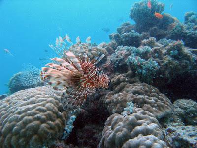 underwater gapang island