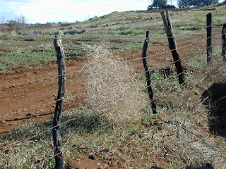 frontier barbed wire fence