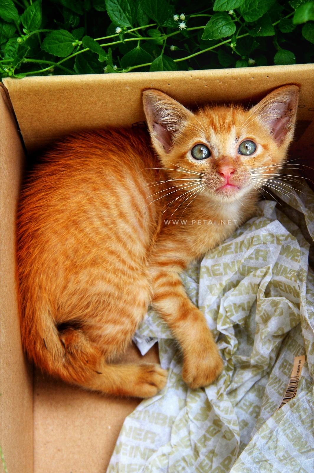 Mengenang Kucing Kesayangan Kami Oyen 3