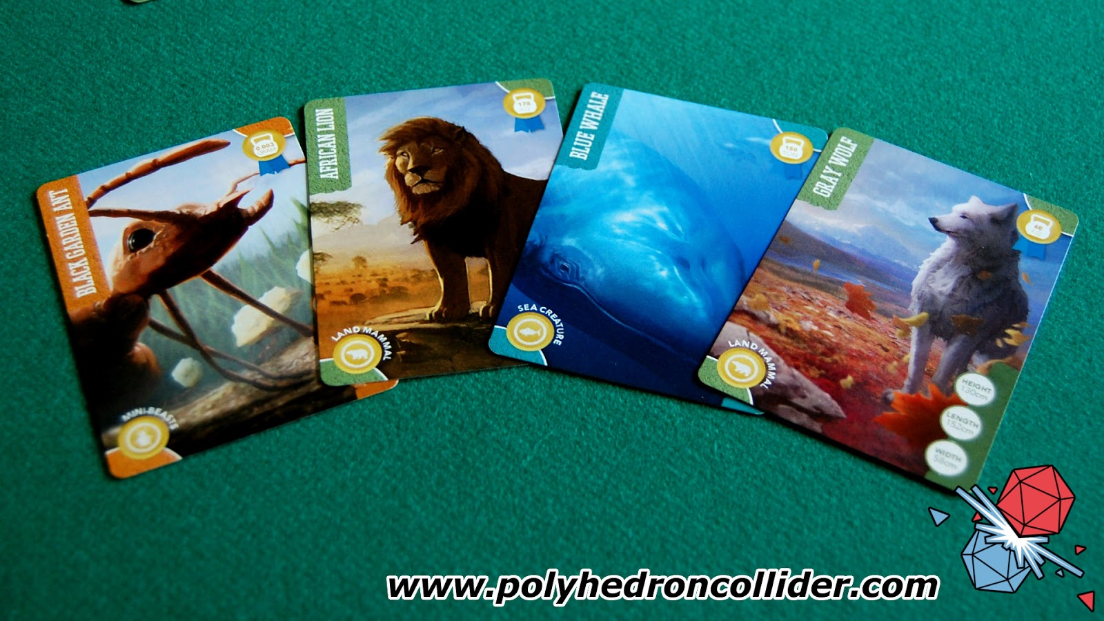 Champion of the Wild Kickstarter Review animal cards