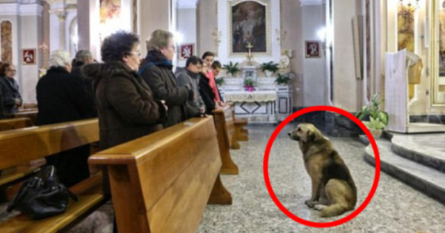 italian dog at the church mourning for its master