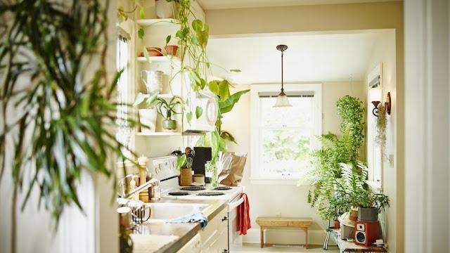 Decorar interior del hogar con plantas