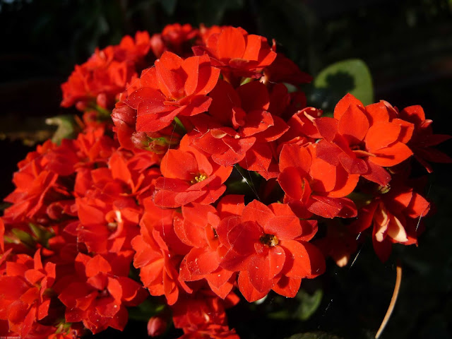 اجمل باقات الورد في العالم