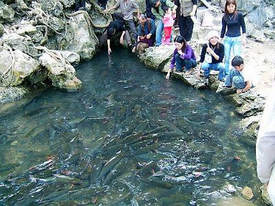 Huyền bí 3 suối cá thần ở Thanh Hóa
