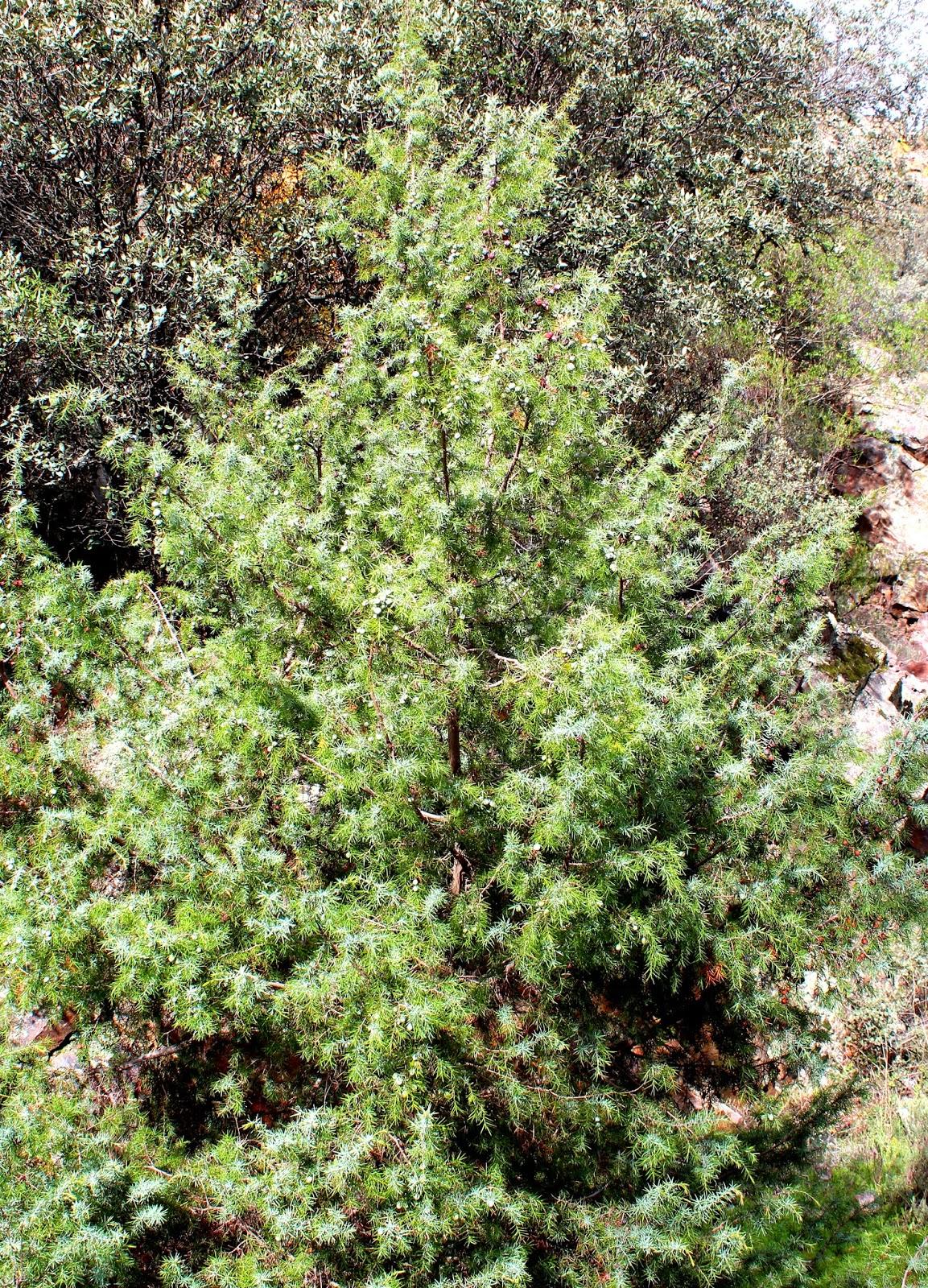 Tejo en el Parque Nacional de Cabañeros