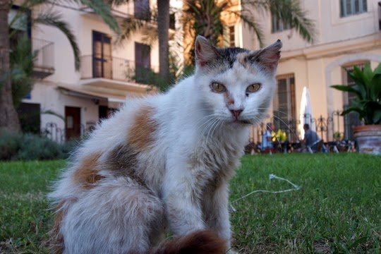 stray cats Sitges