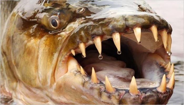 Σε μια βρετανική λίμνη άρχισαν να εξαφανίζονται ψάρια και πάπιες από τα Πιράνχας