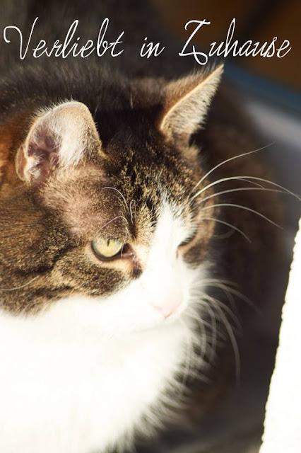Katzenfotografie -Bild vor Bearbeitung