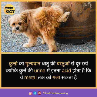interesting facts about dog in hindi