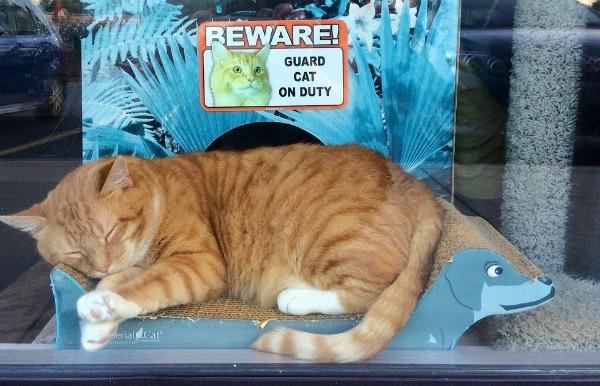 beware guard cat on duty