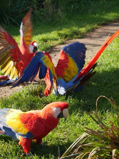 South Lakes Safari Zoo macaw
