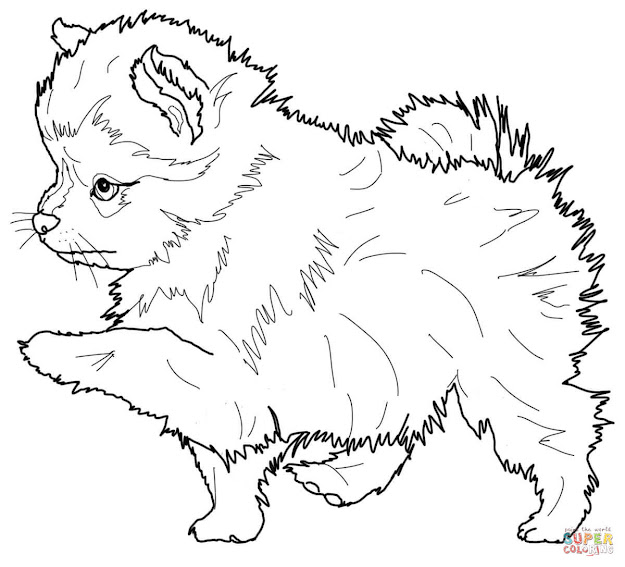 Click The Pomeranian Puppy Coloring Pages