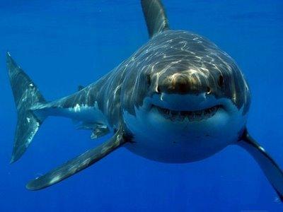 Soñar con tiburón ¿Que significa?