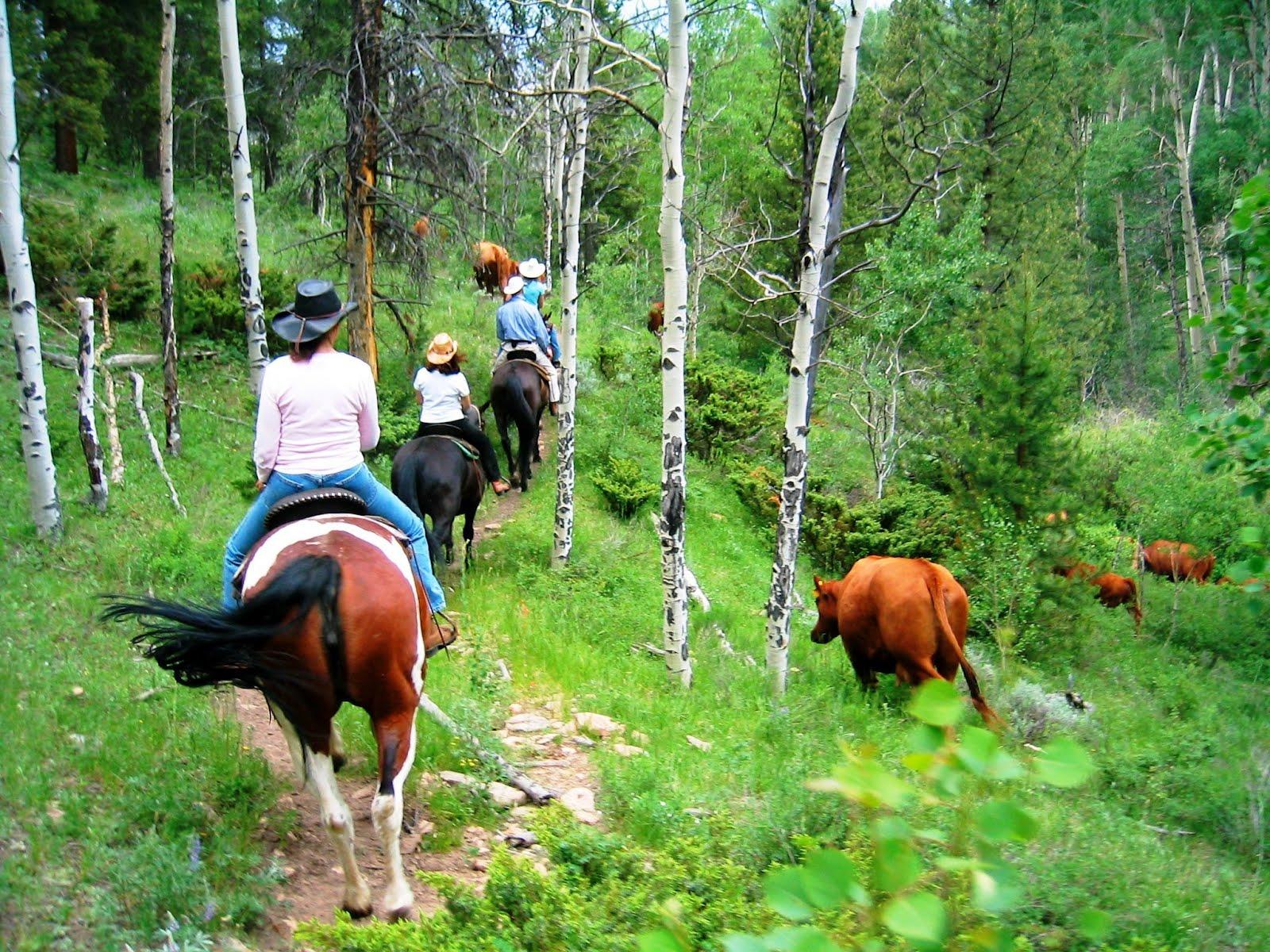 Scenes from a Colorado Dude Ranch Vacation - Drowsy Water Ranch