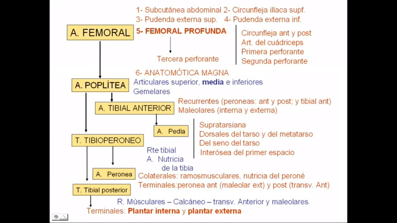Anatomia Medica 2016: Maio 2016