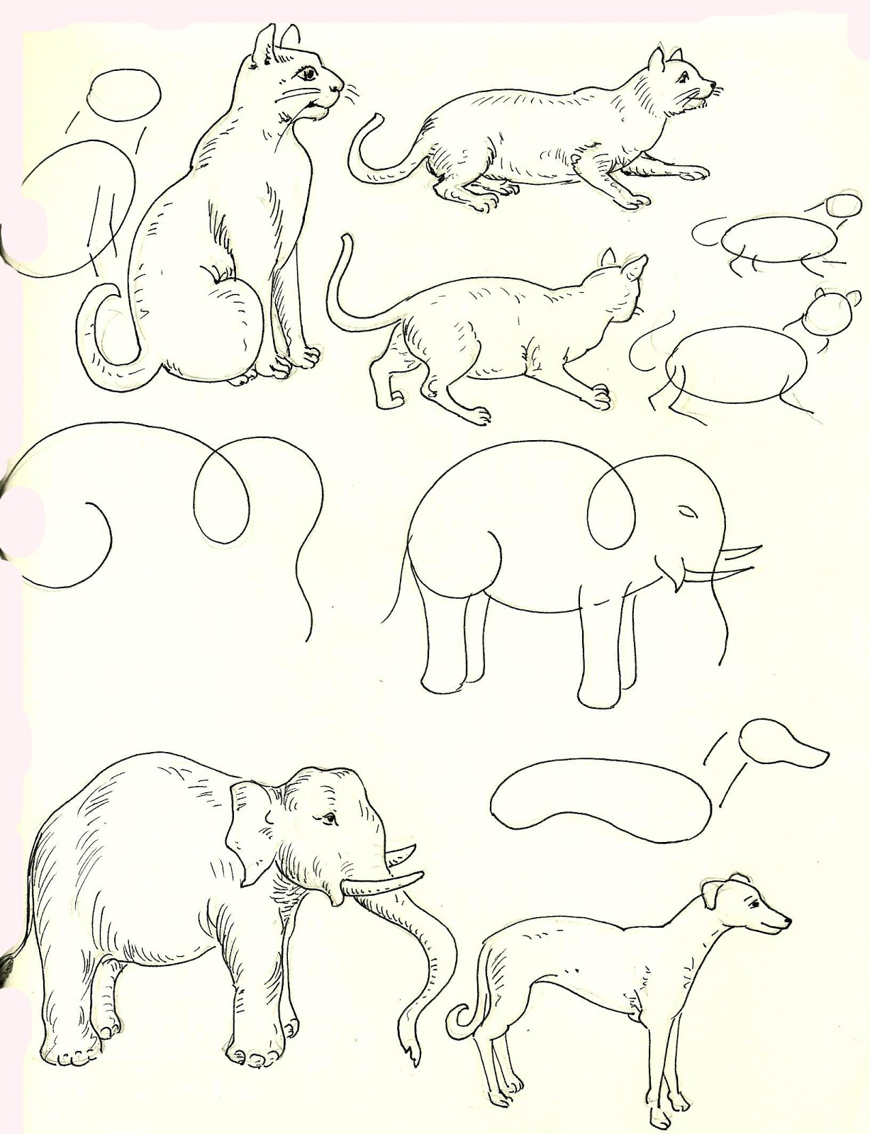 Studentsdrawing Animal Step By Step Easy Outline Drawing Elephant