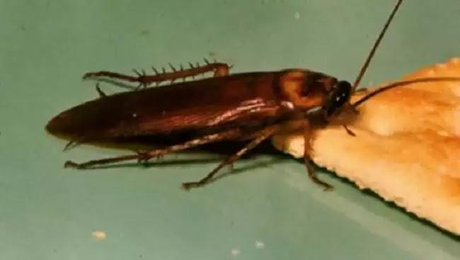 Και νέο βίντεο με κατσαρίδες σε δημόσιο νοσοκομείο – Ποια η απάντηση της ΠΟΕΔΗΝ