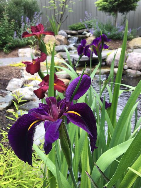 serenity garden cool ponds