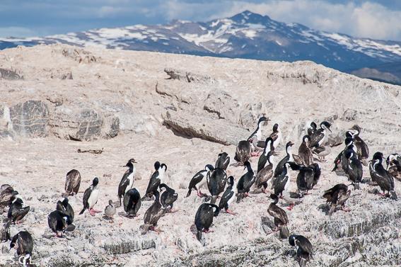 Isla de los lobos en el canal Beagle en Ushuaia. Argentina