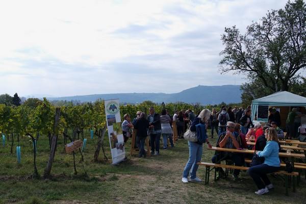 vienne weinwandertag randonnée vignes floridsdorf bisamberg strebersdorf stammersdorf