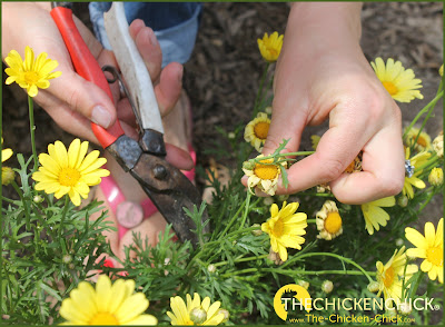 Use a sharp pair of trimming scissors for delicate plants and bypass pruners for thicker stems.