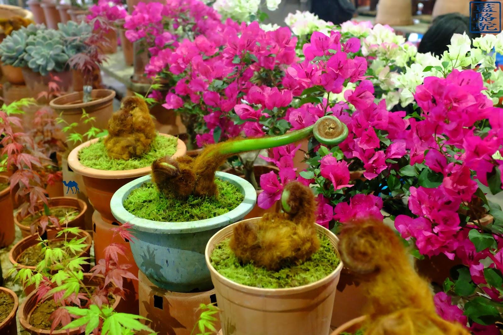 Le Chameau Bleu - Curiosité  du marché au fleur de Taipei - Taiwan