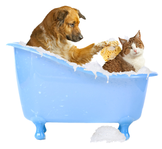 Mickey's Pet Supplies Blog: Shampoos That Are Safe For