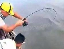 Mancing Ikan Kakap Putih Harus Landed Mantap