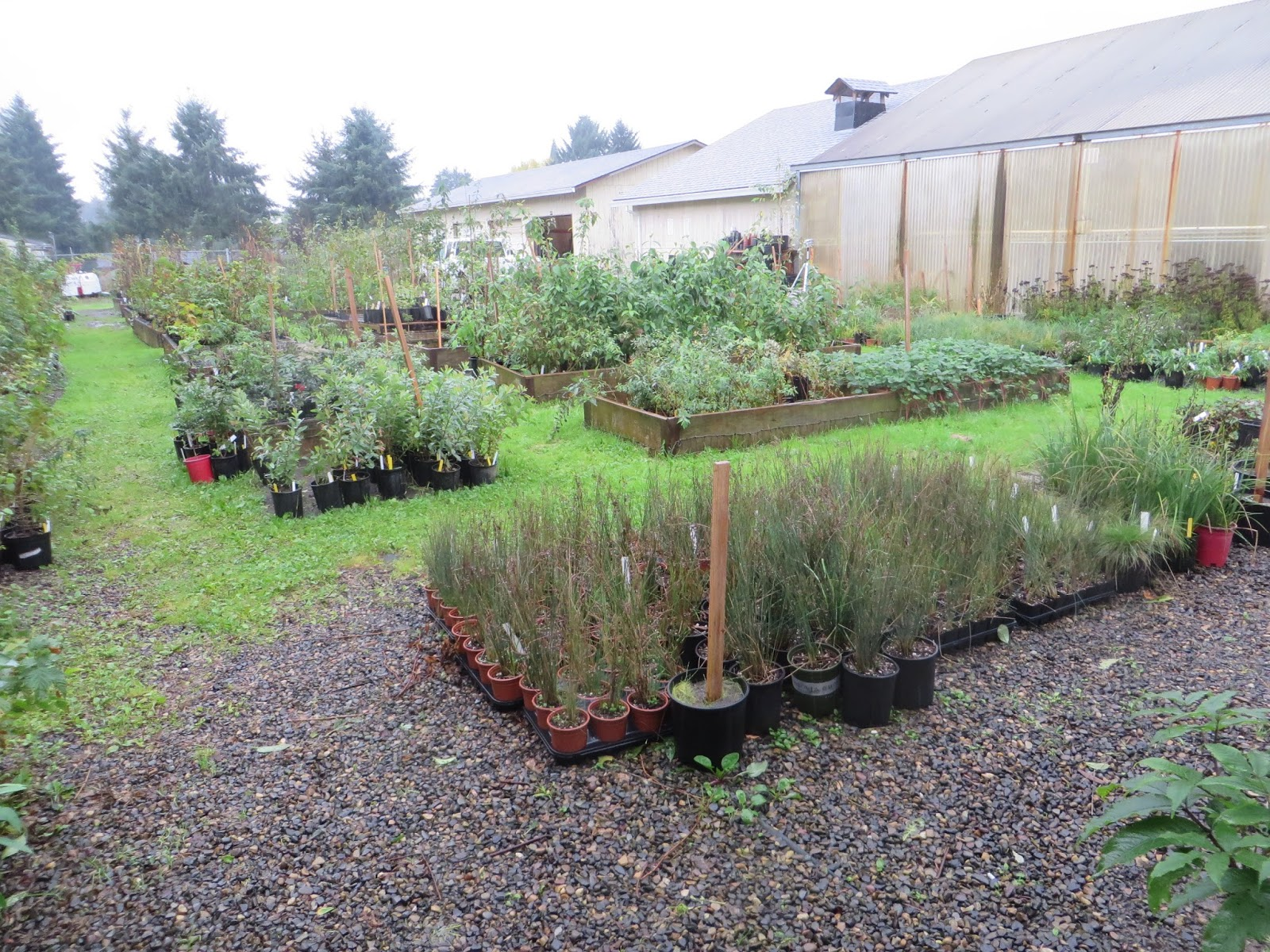The Nursery All Volunteer By Way Raises A Variety Of Native Plants For Both Sun And Shade Funds From Plant S Help To Keep Greenhouse Going