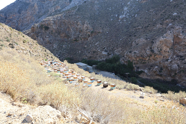 The hills come alive with honey hives in Crete