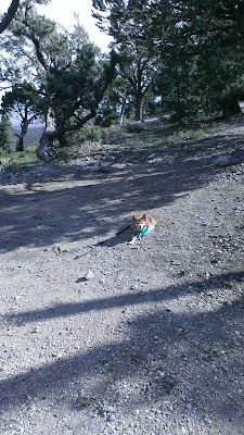 small dog in camp site with turquoise sweater and leash