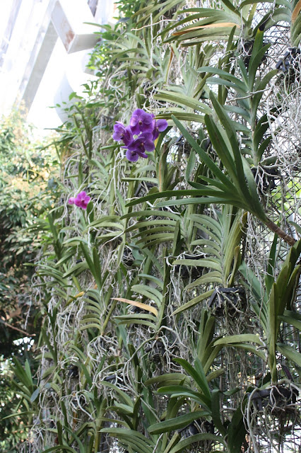 Orchids climbing up to the top at Nicholas Conservatory in Rockford, Illinois.