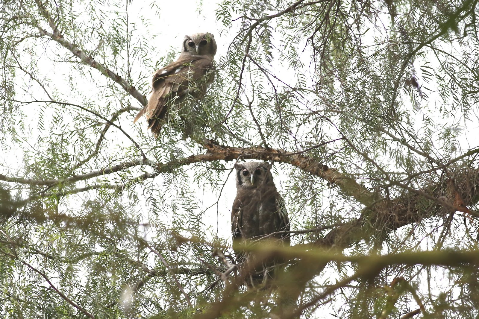 自由自在: 天天充滿驚奇的肯亞賞鳥行 - 往肯亞山的ㄧ路上