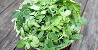 Moringa Bitkisinin Sağlık İçin Faydaları Nelerdir?